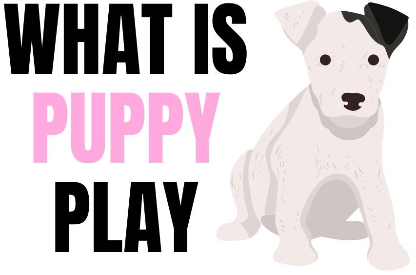 cute cartoon of puppy